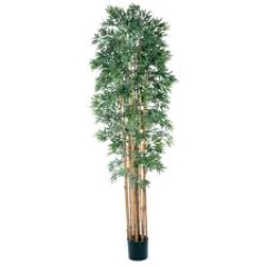 Where to rent BAMBOO TREE 6FT in Spartanburg SC